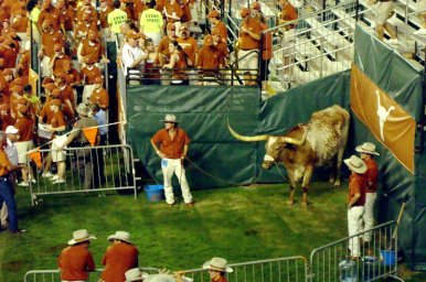 8/30/2008: Bevo's spot evolves as the south grandstands change