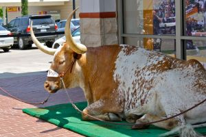 5/7/2011: Waiting for fans at the Fort Worth Co-op