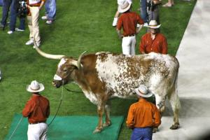 11/19/2011: Stretching his legs at the K State game, DKR