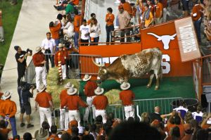 11/22/2012: Celebrating Bevo's 96th anniversary at the Thanksgiving game, DKR