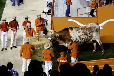 11/27/2014: Celebrating Bevo's 98th anniversary during the Thanksgiving game against TCU, DKR (One of the great things about sitting 52 rows above him was getting to watch him work on those anniversary hay bales! Long after the cameras cut away, he'd still be chowing down.)